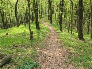 Фото: Яким буде лісове господарство після реформування