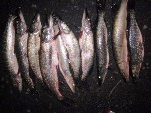 Фото: На Полтавщині затримали браконьєра, який виловив риби на 15 тисяч гривень