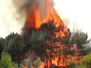 Фото: На Великдень Полтавщину вкрили лісові пожежі