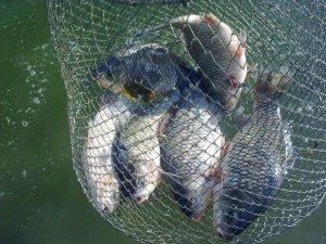 Фото: У мікрорайоні Полтави зловили водних браконьєрів