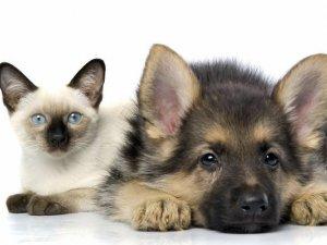 Фото: Як зупинити пронизливі крики котів та собак під час шлюбного періоду