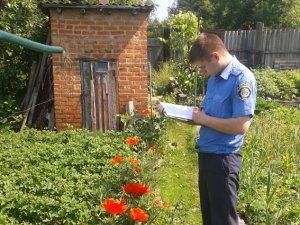 Фото: На Полтавщині виявили 400 рослин маку на городі