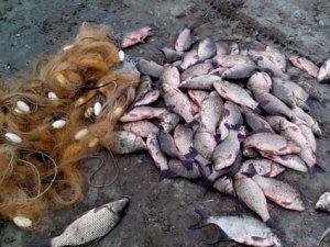 Фото: На Полтавщині затримали водія, який незаконно перевозив 40 кілограмів риби