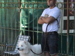Фото: У Полтаві на виставці представили більше 60 порід собак (фото)