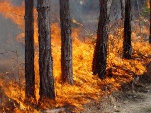 Фото: Полтавцям заборонили ходити до лісу