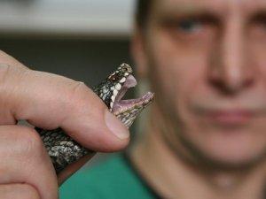 Фото: У Полтаві термін придатності вакцини проти зміїних укусів закінчується у червні