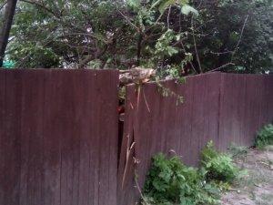 Фото: У Полтаві пиляють аварійні дерева так, що аж ламають паркани (ФОТО)