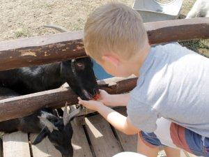 """Фото: Команда ГО""""Рідне місто, Рідний край"""" організувала для дітей екскурсію в зоопарку"""