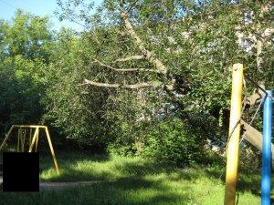 У Полтаві люди скаржаться, що аварійні дерева біля їх будинку не спилюють