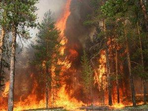 Фото: Пожежники закликають обережніше відпочивати в полтавських лісах