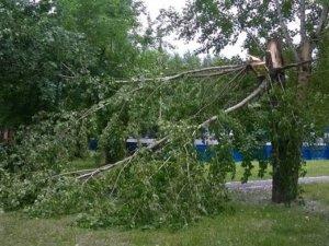 Фото: У Кременчуці гілки дерев травмували людей