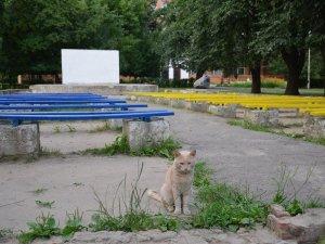 Полтавці за кілька годин привели до ладу літній кінотеатр у парку