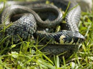 Фото: У Кременчуці хлопчика вкусила змія