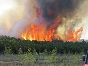 Фото: Полтавські рятувальники попередили про надзвичайний рівень виникнення пожеж