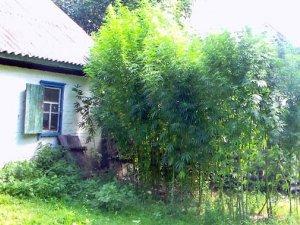 Фото: На Полтавщині чоловік  вирощував більше 200 рослин коноплі