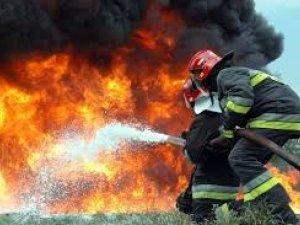 Фото: На Полтавщині під час пожежі загинули кролі