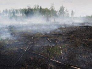 Фото: На Полтавщині спеціально підпалюють очерет, аби отримати пасовища на наступний рік