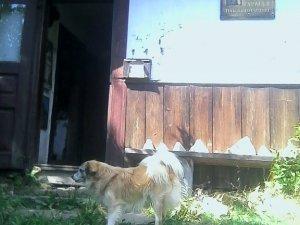 Фото: Параска Плитка-Горицвіт – самотня перлина Гуцульщини