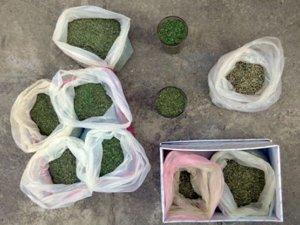 Фото: На Полтавщині у пенсіонера знайшли близько 2 кілограмів конопель