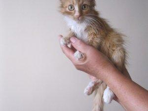 Фото: Безпритульні тварини шукають господарів (ФОТО)