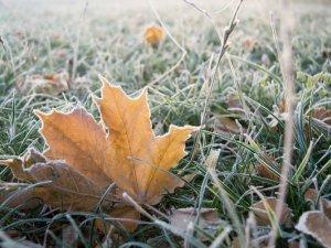 Фото: Синоптики прогнозують похолодання та заморозки: погода у Полтаві на наступний тиждень