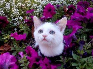 У Полтаві собака, стерилізована австрійцями, принесла волонтерам безпритульне кошеня