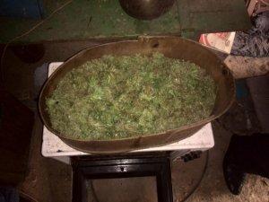 """Фото: У жителя Миргородського району вилучили 2 кілограми """"марихуани"""""""