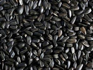 Фото: У Карлівці намагалися вкрасти дві тонни насіння