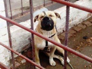 Фото: У Кобеляках собака покусав 6-річну дівчинку