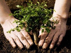 Фото: Жителів Полтавщини та підприємства закликають долучитись до акції «Дерева миру»
