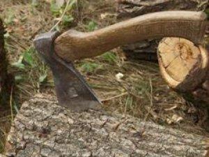 Фото: На Полтавщині чоловік незаконно вирубував дерева