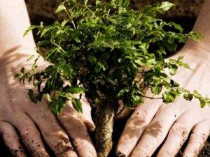 Фото: В Управлінні ЖКГ не знають, скільки коштує осіннє «озеленення» Полтави