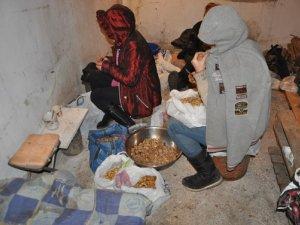 Фото: У Полтаві «накрили» підпільний цех з переробки горіхів