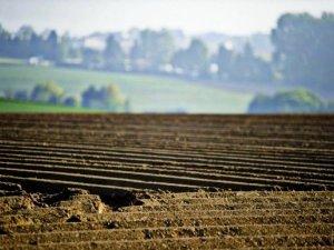 Фото: У Полтавській області на землі за рік заробили 2,6 мільйона гривень