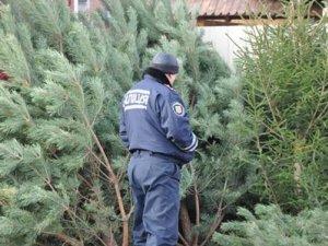 Фото: Водій на Полтавщині незаконно перевозив 600 ялинок