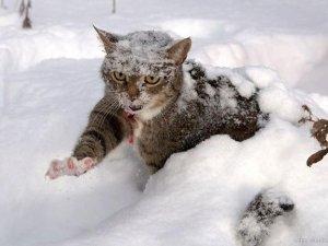 Фото: Синоптики розповіли, коли  стихнуть морози: про погоду в Полтаві