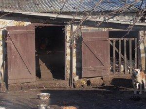 Фото: У Козельщинському районі хлопець вкрав сім курей, щоб прохарчуватися