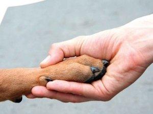 Фото: У Полтаві ще одного собаку врятували з ями