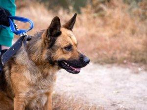 Фото: Безпритульні тварини у Полтаві шукають господарів (ФОТО)