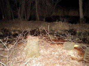 Фото: На Полтавщині чоловік вирубував дерева