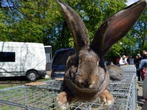 У Полтаві проходить виставка-продаж свійських тварин (фоторепортаж)