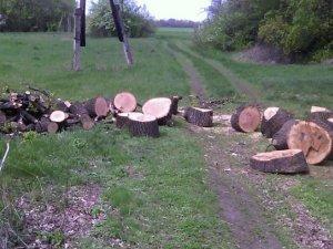 Фото: На Полтавщині затримали чоловіка, який перевозив незаконно зрубані дерева