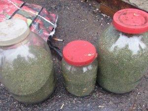 Фото: За зберігання конопель житель Оржицького району може отримали до трьох років