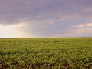 Фото: Оренда земельних паїв на Полтавщині – найдорожчі і найдешевші райони