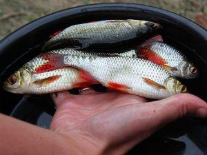Фото: Повернути рибу в річку: полтавці ініціюють масштабну програму зарибнення Ворскли