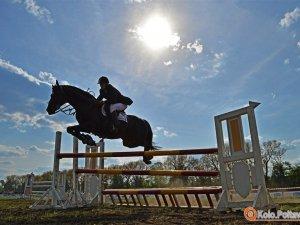 Фото: Огляд новин за тиждень у Полтаві: коні, Петро та Мазепа