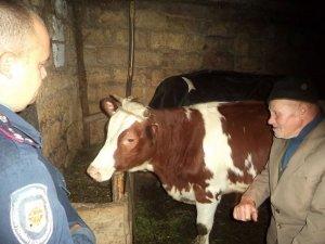 Фото: У жителя Пирятинського району вкрали корів та перевезли їх до Чернігівської області