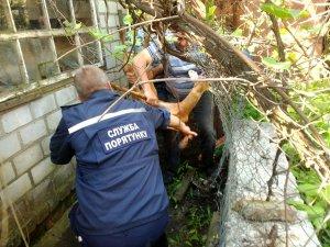 Фото: На Полтавщині врятували косулю, яка заплуталась у сітці (фото)