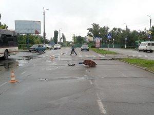Фото: У Горішніх Плавнях водій «БМВ» збив жінку