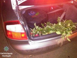 Фото: У Корпусному парку двоє полтавців на «Audi A4» зрізали 60 троянд